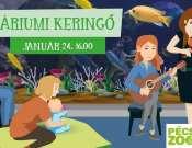 Akváriumi Keringő január
