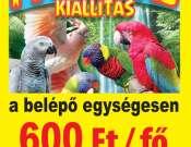 Papagáj kiállítás Pécsett a Vasutasban