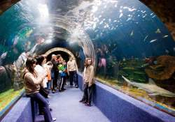 5 Lenyűgöző óriásakvárium és ócenárium, amit nektek is látnotok kell