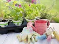 Fűszernövények a konyhában