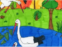 A mi gólyánk - rajzpályázat