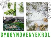 Gyógynövények - ingyenes tanfolyam! Kisharsányban