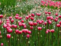 Tavaszi viráglesen - 5 virágbontó hely, amit látnod kell