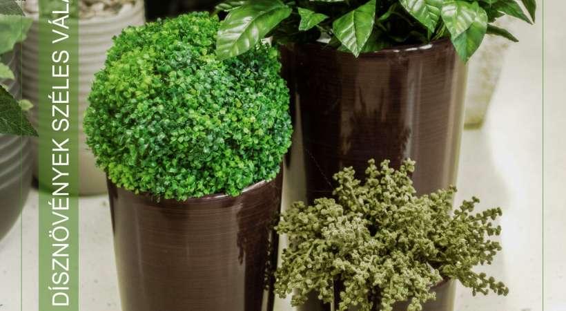 QX kaspók, dísznövények